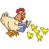reading hen